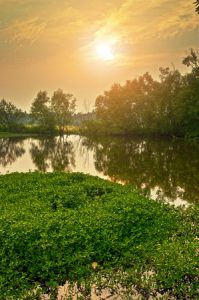 How Can Timber Mats Protect Sensitive Wetland Ecosystems?